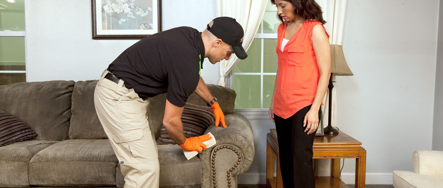 Royal Oak, MI carpet upholstery cleaning
